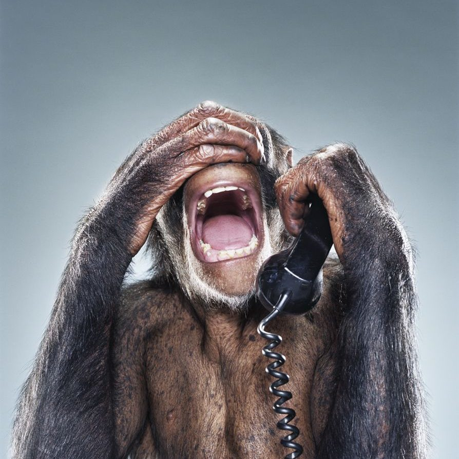 monkey-on-phone